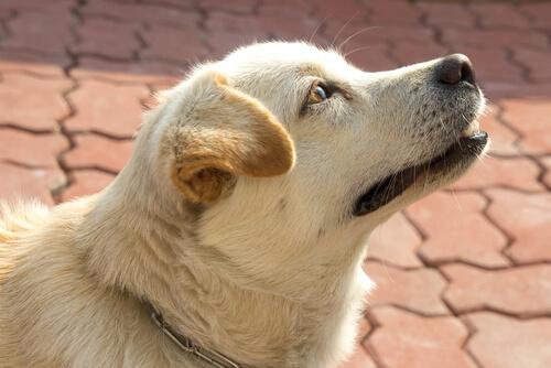¿Conocen los perros la hora? ¡Sí, por su nariz!