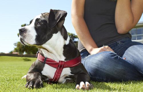 Tener un perro mejora tu salud emocional y física