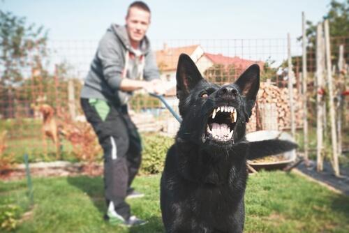 ¿Cómo educar un perro peligroso en potencia?