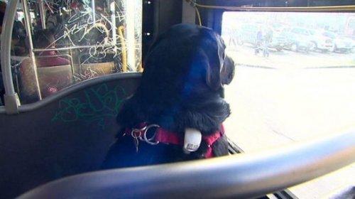 Perro solo en el autobus