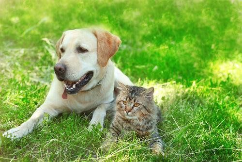 cachorro e gato deitados na grama