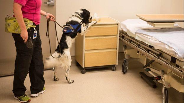 cachorro no hospital buscando superbactéria