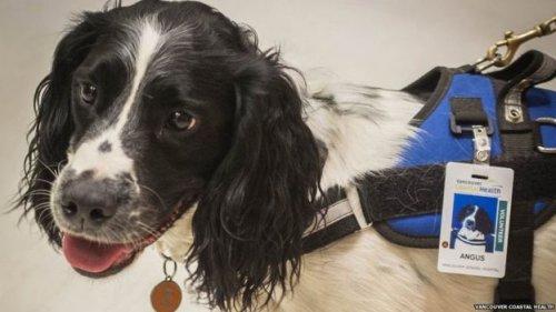 Conoce dos perritos que cazan superbacterias en un hospital canadiense