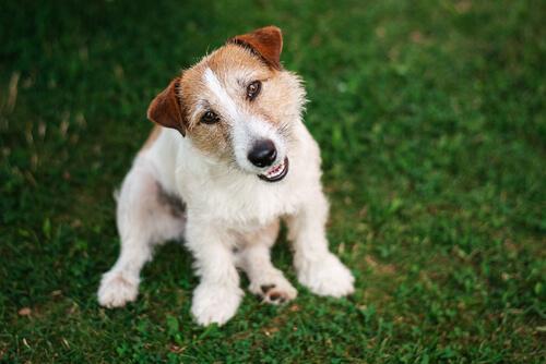 ¿Cómo los perros entienden lo que decimos?