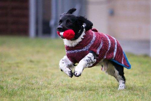 Suéteres para perros negros sin hogar