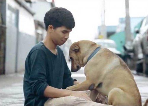 Un joven da el primer abrazo a los perros sin hogar