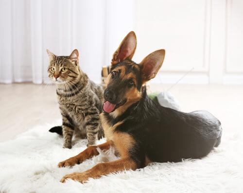 Perro y gato tumbados