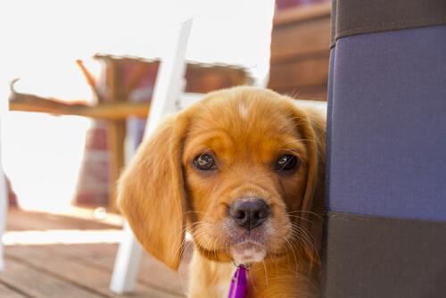 10 cosas que no se debe hacer si respetas a tu perro