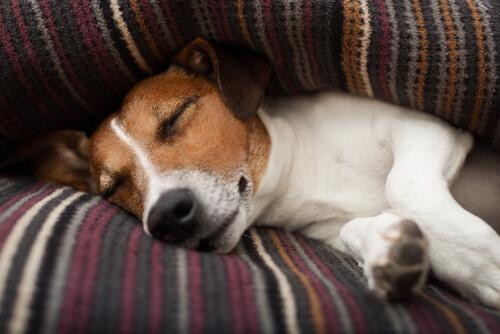 Cuál es la temperatura normal de un perro
