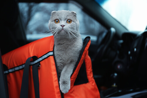 Precacuciones para viajar con tu mascota en coche