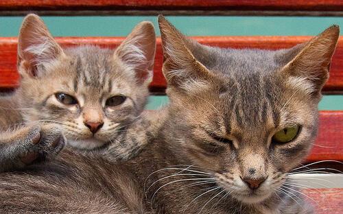 Vida de los gatos