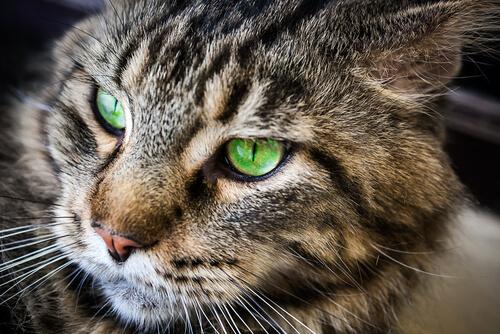 Vidas de los gatos
