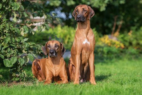 Dos perros en el jardin