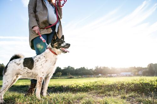 Un ejemplo que te hará ver la especial relación entre perros y personas