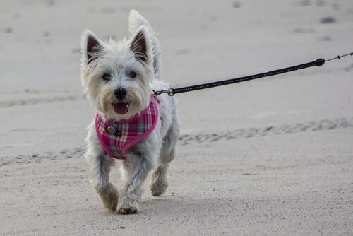 Errores que cometemos al salir de paseo con el perro