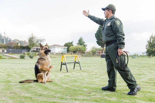 Entrenamiento perro policia