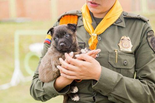 Una serie hace homenaje a los perros policías