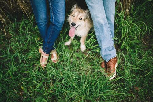 Portugal: las parejas separadas tienen un régimen de visitas para mascotas