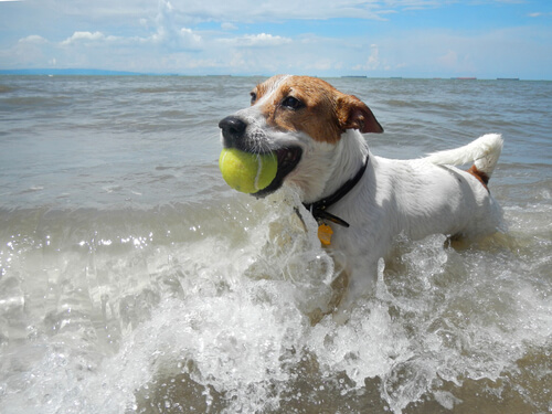 Llevar el perro a la playa