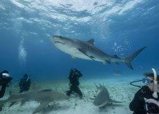 Nadando con tiburones