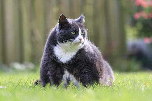 Mascotas con sobrepeso: cómo evitarlo