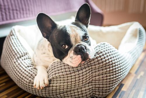 Mejor cama para perros