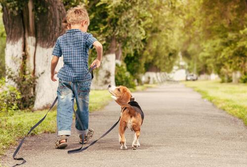 Niños y mascotas, la mejor combinación