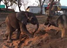Perro jugando con un bebe elefante