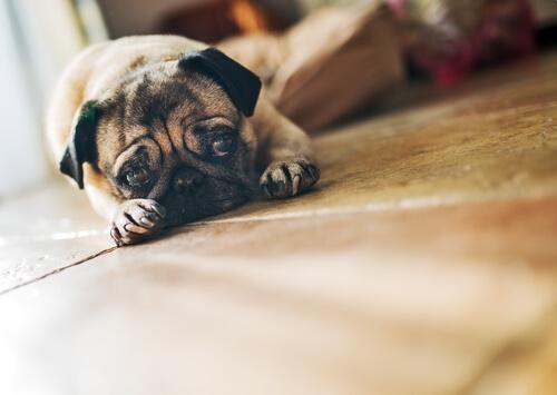 ¿Qué hago si mi perro está triste?