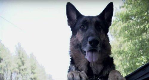 Perro abandonado salva a una mujer que tuvo un accidente