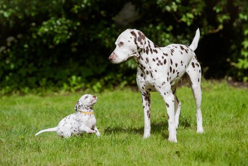 Los perros más bonitos del planeta