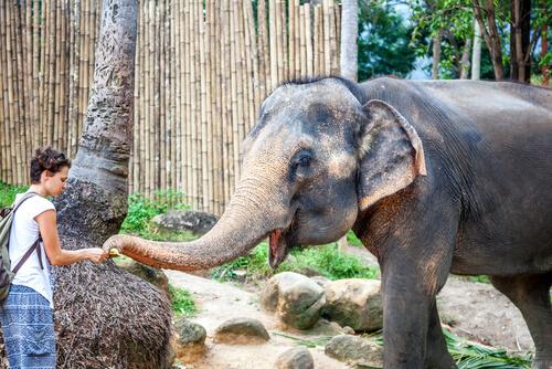 Mujer dandole un beso a un elefante