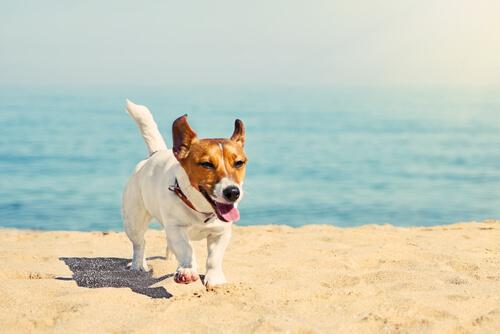 Lugares ideales para ir de vacaciones con el perro