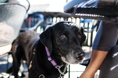 Consejos para viajar en avión con perros en estas vacaciones