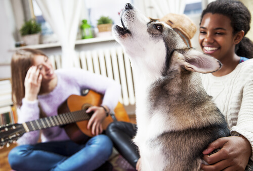 ¿A los perros les gusta la música?