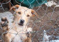Perro en un refugio