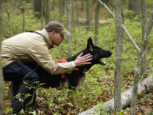 ¿Cómo elegir al mejor adiestrador para perros?