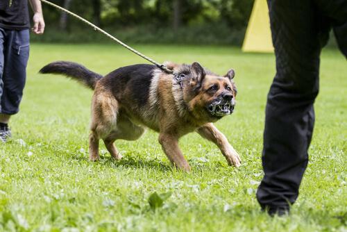 Cómo prevenir la agresividad en tu perro