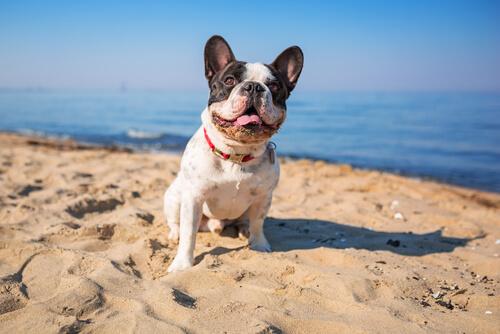 ¿Es buena el agua de mar para tu perro?