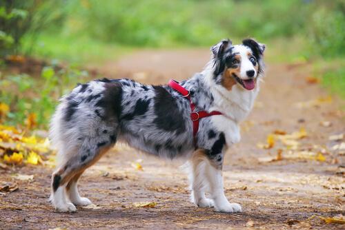 ¿Collar o arnés para pasear a tu perro?