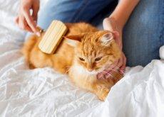 Mujer cepillando a un gato