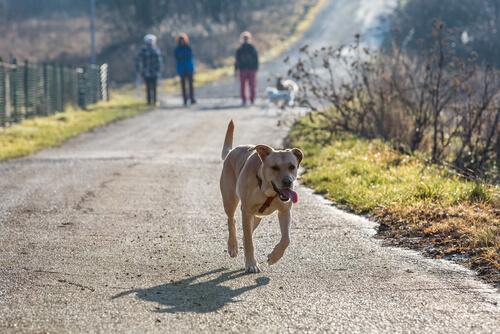 ¿Cuánto tiempo tengo que buscar un perro perdido?