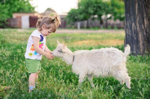 Cabras como mascota, una buena opción para los niños.