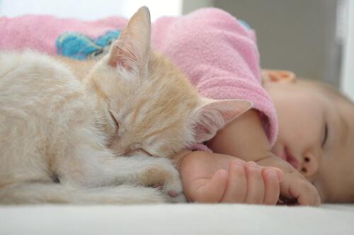 Gato durmiendo con un niño