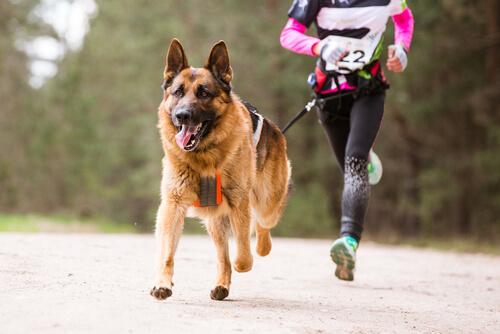 Perro corriendo con su dueño
