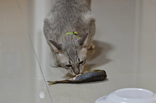 Gato oliendo pescado