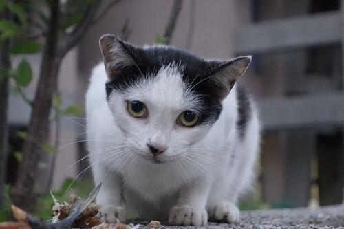 Comportamientos extraños en los gatos