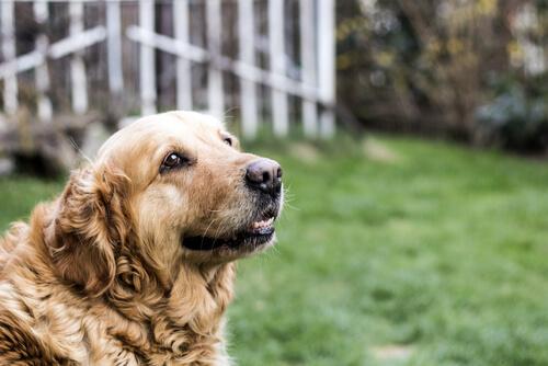 Principales cuidados de un perro anciano
