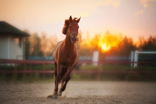 ¿Sabías que los caballos tienen solo un dedo?