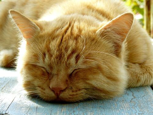 ¿Cuántas horas duerme tu gato?